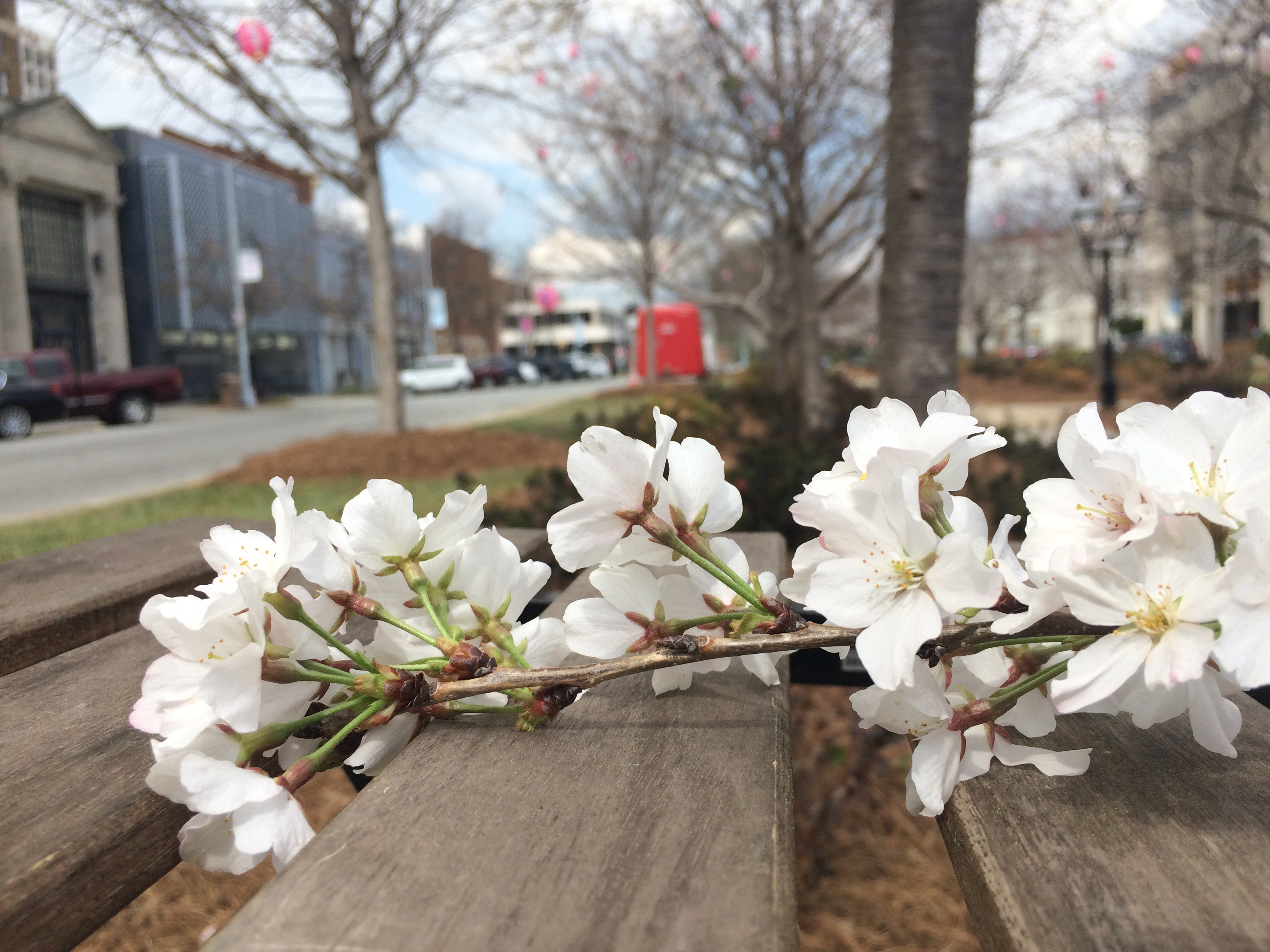 Top 5 Places To See Cherry Blossom Trees 13wmaz Com